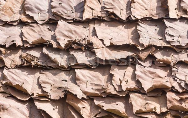 Dry leaf pattern  Stock photo © stoonn