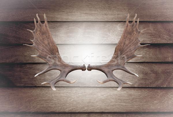 Closeup horn moose on wooden wall  Stock photo © stoonn