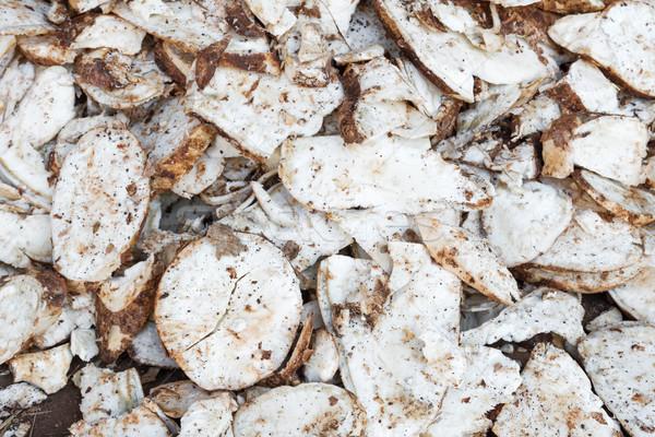 Cassava root slice Stock photo © stoonn