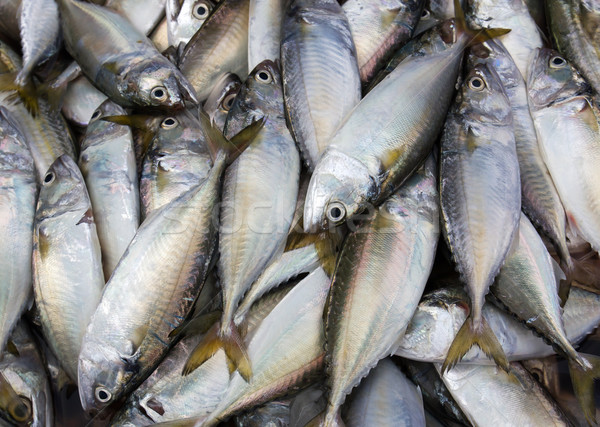 Friss makréla tenger piac Thaiföld étel Stock fotó © stoonn