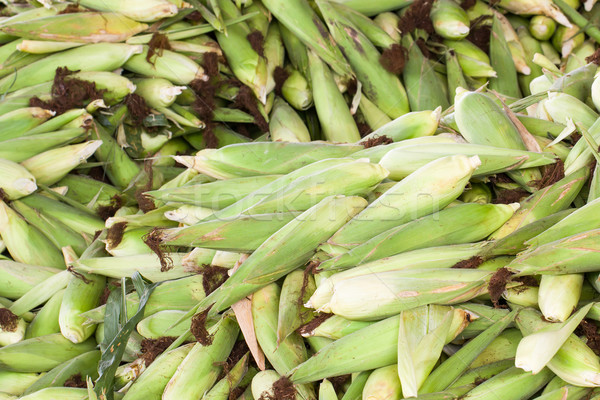 Fresh corn with husk Stock photo © stoonn