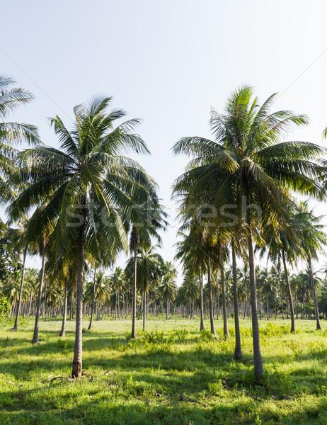 Kokosnoot plantage eiland Thailand achtergrond palm Stockfoto © stoonn
