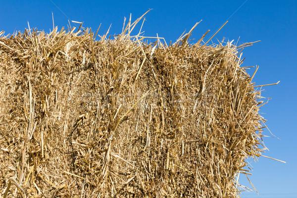 Mező széna szalmaszál vidék aratás idő Stock fotó © stoonn