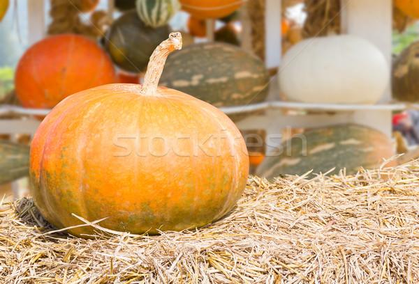 Abóbora fazenda produção rural colheita temporada Foto stock © stoonn