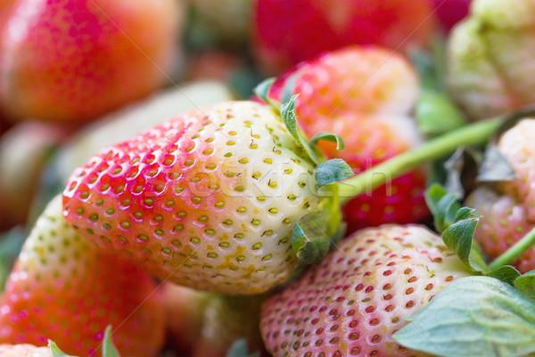 Friss eprek ültetvény Thaiföld étel eper Stock fotó © stoonn