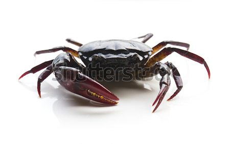 Closeup of crab  Stock photo © stoonn