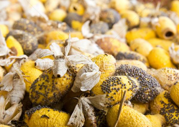 Closeup image of silkworm  spawn Stock photo © stoonn