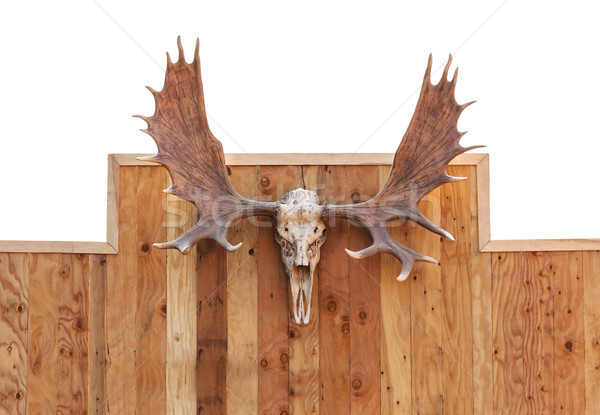Schedel eland muur houten Stockfoto © stoonn