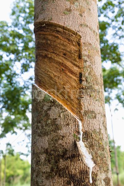 Látex borracha árvore Tailândia indústria Foto stock © stoonn
