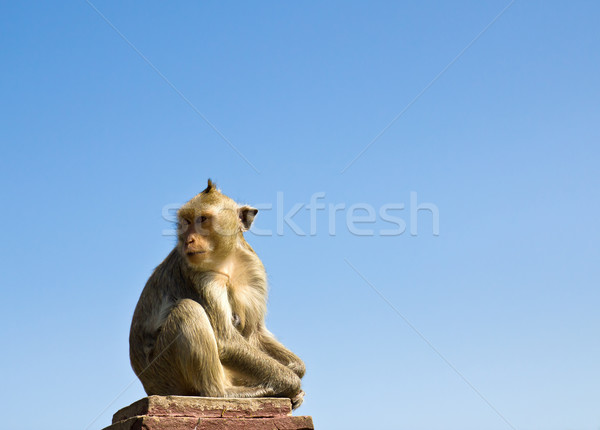 Сток-фото: обезьяны · каменные · Blue · Sky · Таиланд · ребенка · глазах