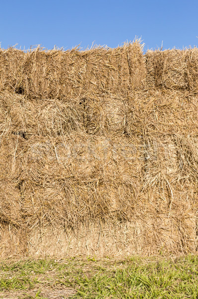 Field with bales of hay Stock photo © stoonn