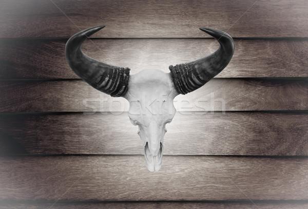 Closeup skull cow on wooden wall  Stock photo © stoonn