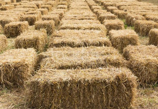 Straw bales in row Stock photo © stoonn