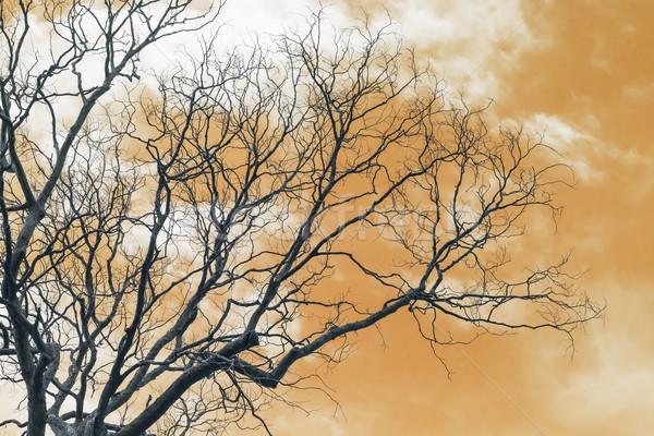 ág kidőlt fa levelek narancs fa erdő Stock fotó © stoonn