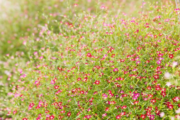 花 水平な 春 夏 ストックフォト © stoonn