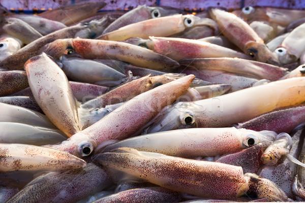 Fresche calamari primo piano frutti di mare mercato alimentare Foto d'archivio © stoonn