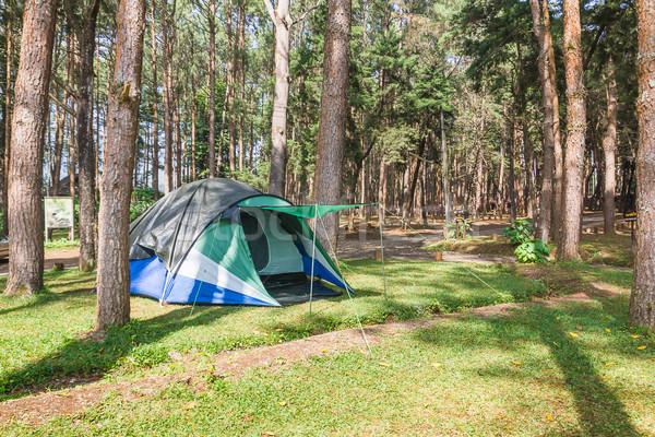 Kupola sátor kempingezés erdő turista helyszín Stock fotó © stoonn