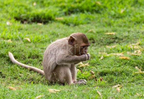 Maymun bebek çim yüz doğa çocuk Stok fotoğraf © stoonn
