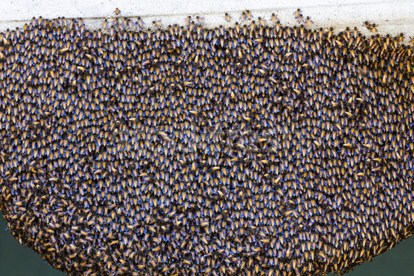 Bees inside a beehive Stock photo © stoonn
