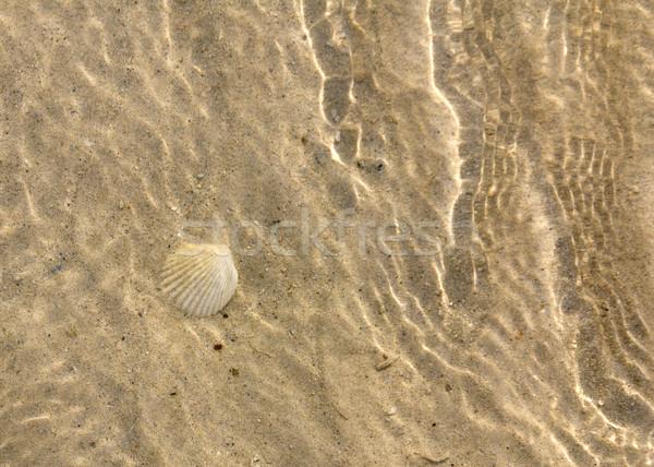 Schelpdier onderwater oceaan vloer natuurlijke leefgebied Stockfoto © stoonn