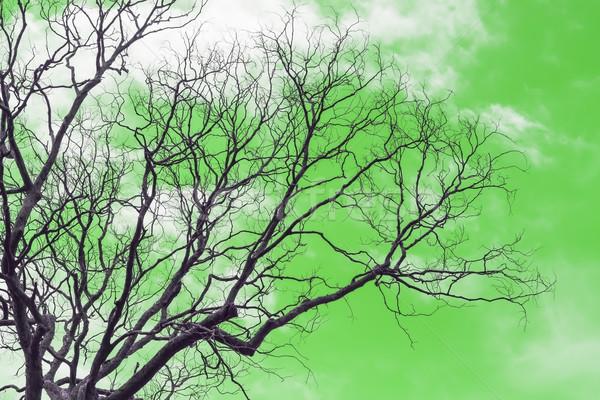支店 枯れ木 葉 緑 ツリー 森林 ストックフォト © stoonn