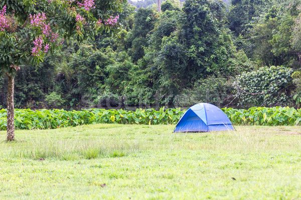 Blue tourist tents in forest Stock photo © stoonn