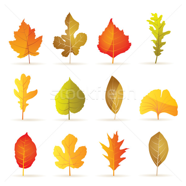 different kinds of tree autumn leaf icons  Stock photo © stoyanh