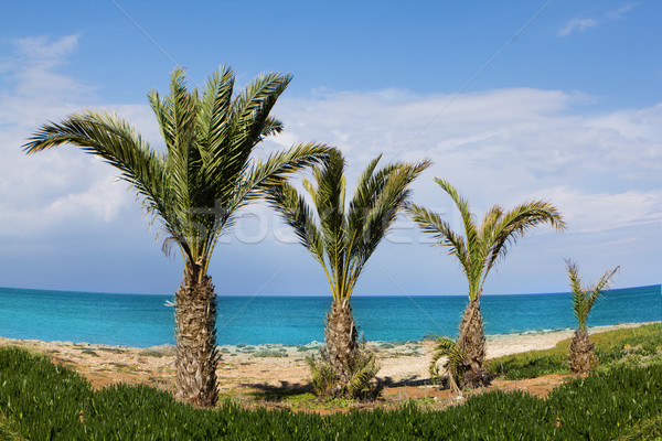 Resort palme spiaggia cielo albero nubi Foto d'archivio © stryjek