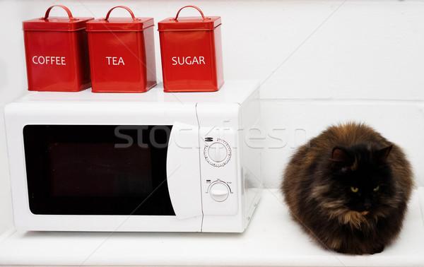 黒猫 座って キッチンカウンター ビッグ ふわっとした 電子レンジ ストックフォト © stryjek