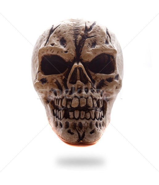 Frontal View Human Skull Stock photo © stryjek