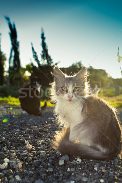 Little kitty  Stock photo © stryjek