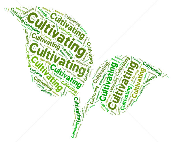 Cultivating Word Means Words Text And Grows Stock photo © stuartmiles
