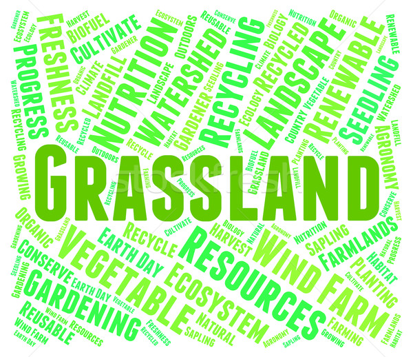 Grassland Word Represents Environment Grassy And Prairie Stock photo © stuartmiles