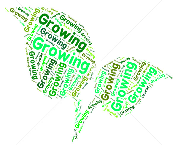 Growing Word Shows Growth Grows And Cultivation Stock photo © stuartmiles