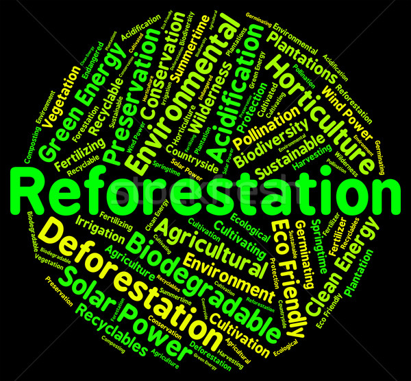 Reforestation Word Shows Again Woodlands And Words Stock photo © stuartmiles