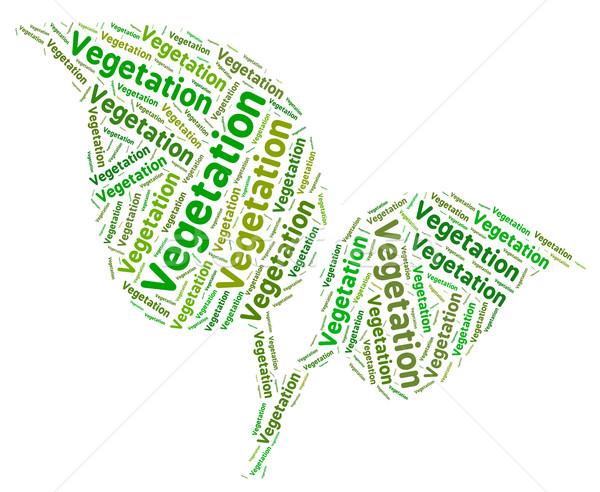 Vegetation Word Indicates Plant Life And Botany Stock photo © stuartmiles