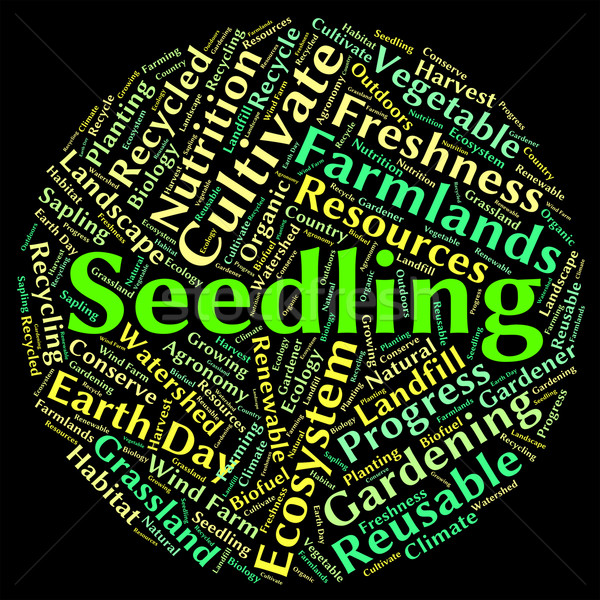 Seedling Word Represents Plant Life And Flora Stock photo © stuartmiles