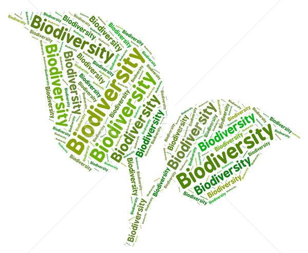Biodiversity Word Means Plant Life And Biodiverse Stock photo © stuartmiles