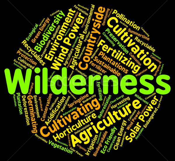 Wildernis woord grond woorden Stockfoto © stuartmiles