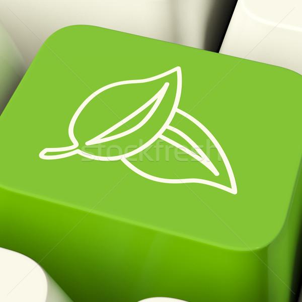 Stok fotoğraf: Yaprakları · ikon · bilgisayar · anahtar · yeşil