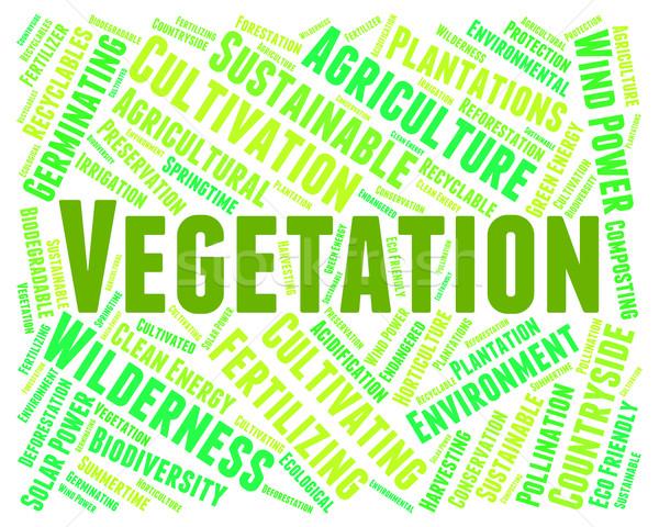 Vegetation Wort Anlage Leben Stock foto © stuartmiles