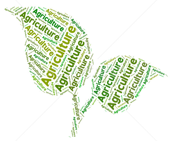 Agriculture Word Represents Cultivates Farming And Farm Stock photo © stuartmiles