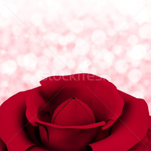 Rose With Bokeh Background For Womens Birthday Or Valentines Stock photo © stuartmiles