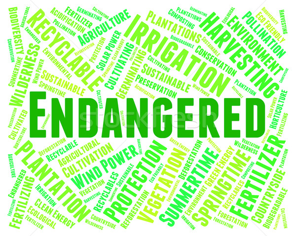 Endangered Word Represents At Risk And Endangers Stock photo © stuartmiles