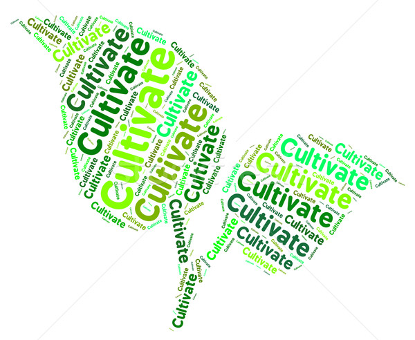 Cultivate Word Means Words Cultivation And Text Stock photo © stuartmiles