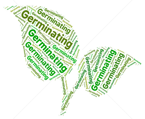 Germinating Word Shows Germination Cultivates And Germinates Stock photo © stuartmiles