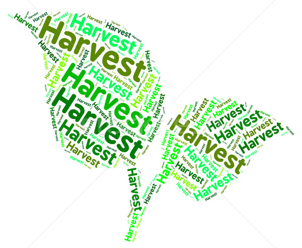 Harvest Word Shows Grain Produce And Text Stock photo © stuartmiles