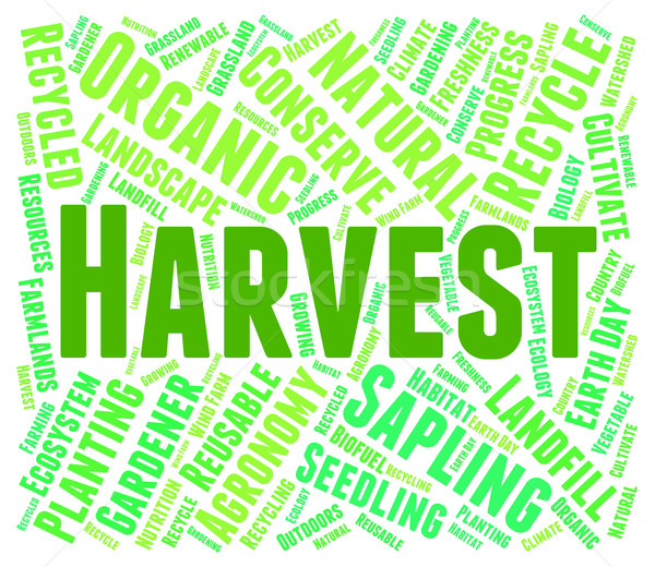 Harvest Word Means Produce Grain And Harvests Stock photo © stuartmiles