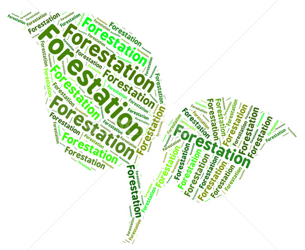 Forestation Word Means Forested Copse And Words Stock photo © stuartmiles