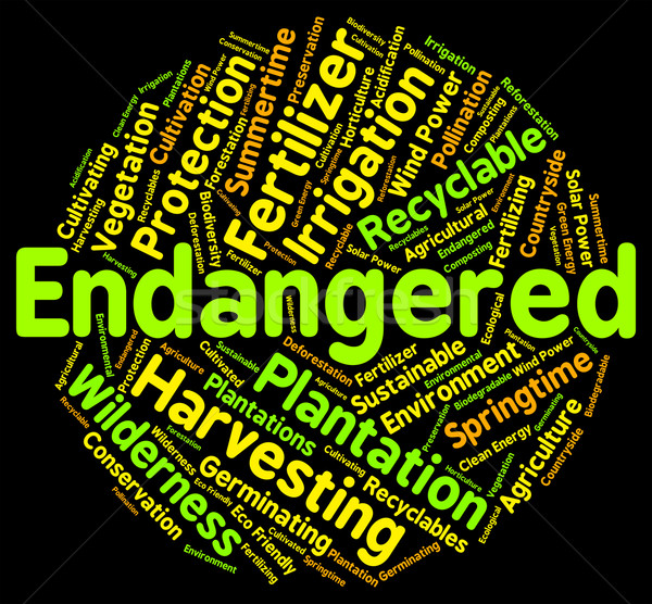 Endangered Word Means Facing Extinction And Endangering Stock photo © stuartmiles